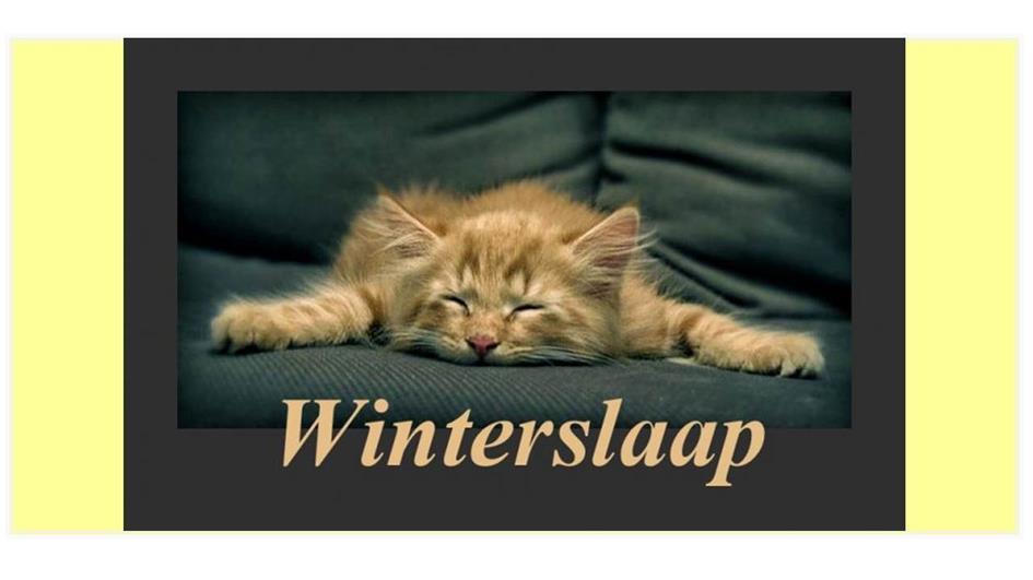 winterslaap-poesv3_bord.jpg