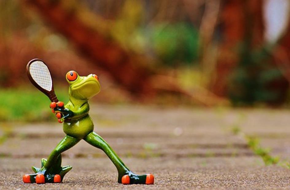 frog-1212197__340.jpg