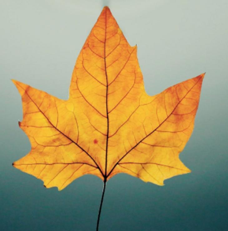 herfstblad.png