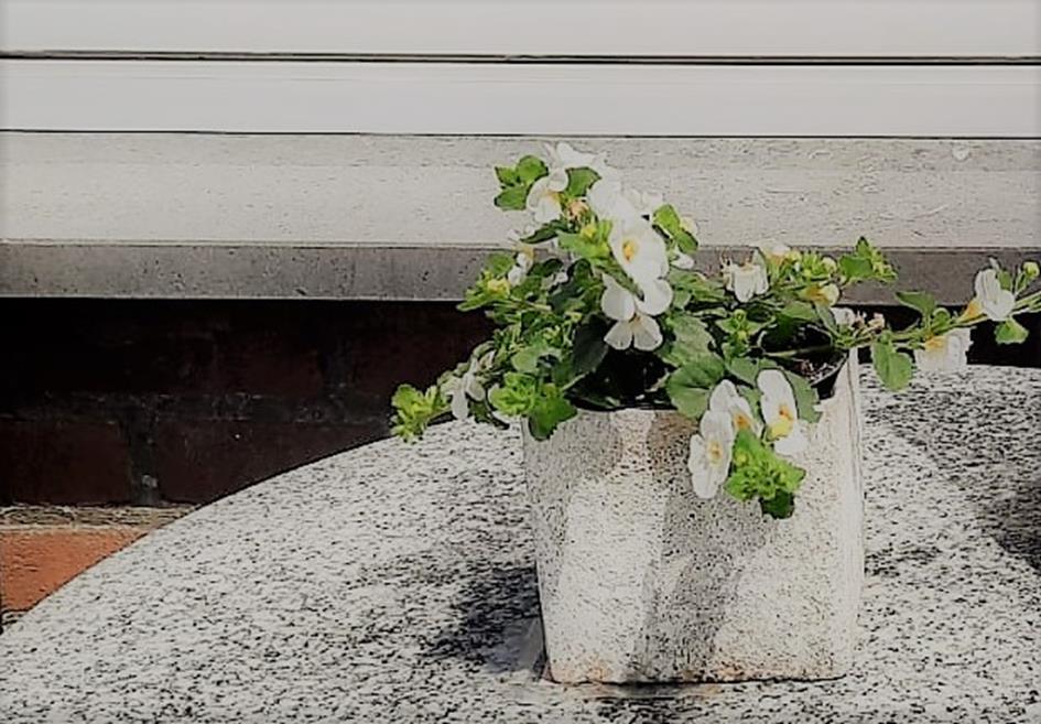 bloemenhuis2 (2).jpg