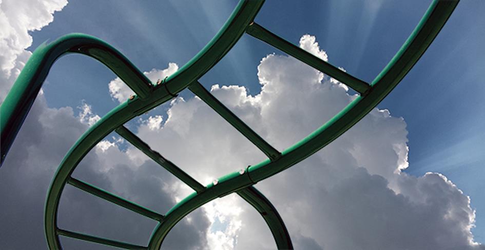 ladder_50.jpg